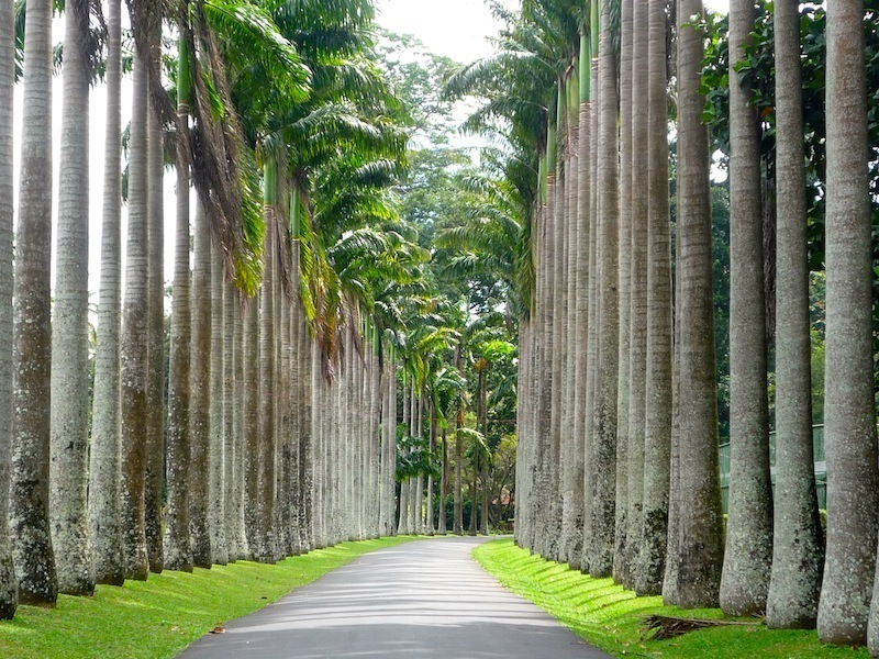 1386432731_1379167517_cabbage-palm-avenue[1]